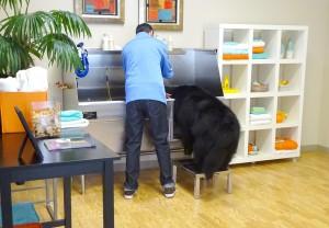 Large Dog on Canine Stool